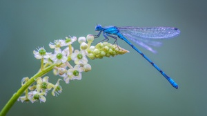 Dragonfly Flower Insect Macro 2048x1152 Wallpaper