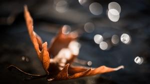 Bokeh Fall Leaf Macro 2560x1598 Wallpaper