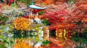 Bridge Daigo Ji Fall Japan Kyoto Lake Nature Park 4928x3280 Wallpaper