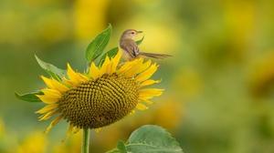 Sunflower Yellow Flower Wildlife 3840x2160 wallpaper