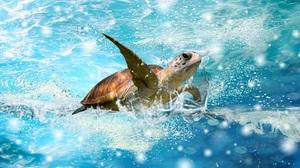 Animal Sea Turtle 1920x1080 wallpaper