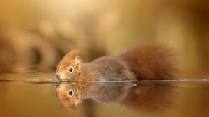 Reflection Rodent Squirrel Wildlife 2048x1366 Wallpaper