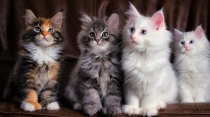 Baby Animal Cat Cute Fluffy Kitten Pet 2048x1365 wallpaper