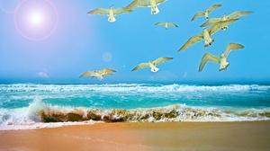 Beach Bird Sea Seagull 1920x1200 wallpaper
