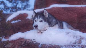 Dog Pet Snow Rock Winter 2048x1365 Wallpaper