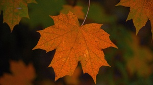 Outdoors Plants Fall Leaves 2560x1709 Wallpaper