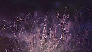 Earth Grass 2456x1610 Wallpaper