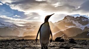 Animal Bird Emperor Penguin Penguin Sunbeam 5373x3582 Wallpaper