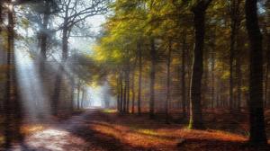 Forest Path Sunbeam 3840x2160 Wallpaper