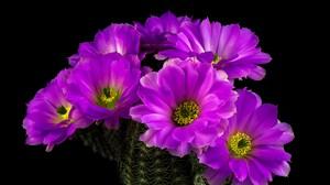 Cactus Earth Flower Purple Flower 5200x3447 Wallpaper