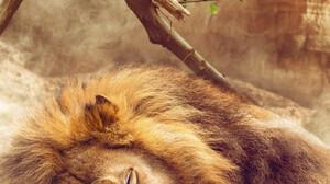 Shaun Jonas ArtStation Lion Portrait Display Artwork The Lion King Fan Art Digital Painting CGi 3D D 2932x3665 wallpaper