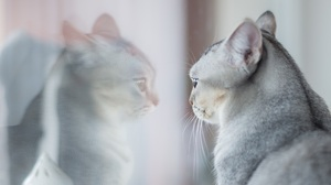 Cat Pet Reflection 3435x2293 Wallpaper