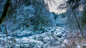 Forest Nature Stream Winter 2048x1365 Wallpaper