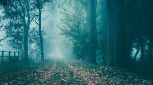 Fall Forest Fog Fence 6000x4000 wallpaper