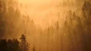 Fog Forest Nature Sunbeam 2048x1365 wallpaper