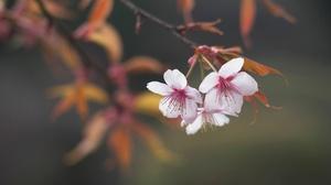 Blossom Branch Spring 2048x1246 wallpaper