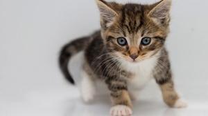 Baby Animal Cat Kitten Pet 4432x2955 wallpaper