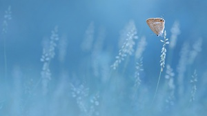 Plants Outdoors Blue Background Animals Insect Butterfly Nature 2499x1660 Wallpaper