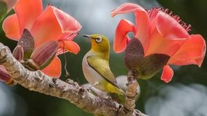 Bird Flower Wildlife 2048x1366 Wallpaper