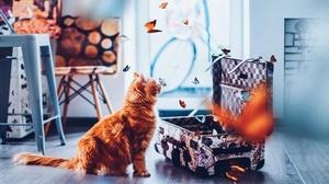 Butterfly Cat Pet Suitcase 2000x1333 wallpaper