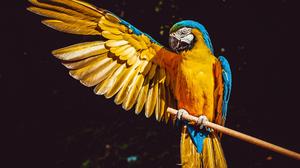Bird Macaw Parrot Wings 5120x2880 wallpaper