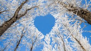 Heart Shaped Nature Tree Treetops Winter 3923x2615 wallpaper
