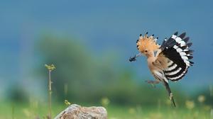 Bird Wildlife 2000x1334 Wallpaper