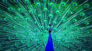 Blue Feather Green Peacock 1920x1080 wallpaper