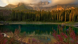 Alps Cloud Fireweed Flower Forest Lake Mountain Reflection 2880x1902 wallpaper