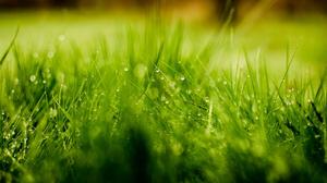 Grass Green Nature Water Drop 1920x1200 Wallpaper