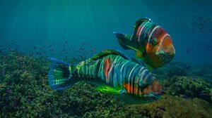 Animal Parrotfish 1920x1080 Wallpaper
