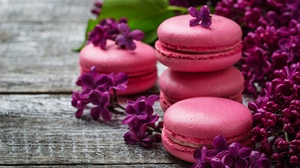 Flower Lilac Macaron Purple Flower 4608x3072 Wallpaper