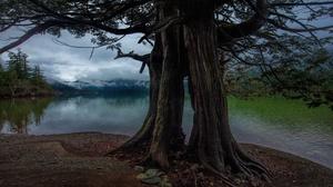 Pond Roots Tree Trunk 3840x2160 Wallpaper