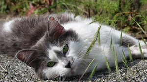 Cat Green Eyes Lying Down Pet Stare 3111x2074 wallpaper