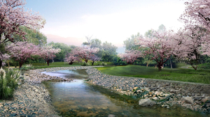 Blossom Nature Park River Rock Sakura Spring Stone Stream Tree 1920x1200 Wallpaper