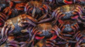 Thailand Crabs Seafood Market 2000x1333 wallpaper