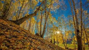Fall Leaf Tree 2048x1365 Wallpaper