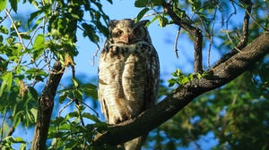 Bird Owl Wildlife 2880x1920 Wallpaper