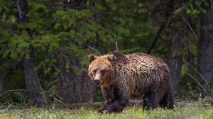 Bear Wildlife Predator Animal 2048x1365 Wallpaper