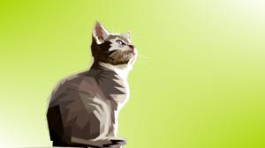Cat 1920x1171 wallpaper