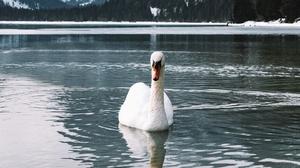 Bird Pond Swan 2880x1620 Wallpaper
