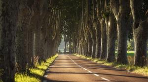 Anton Rostovskiy Road Trees Landscape Shadow Grass Sunlight 2000x1500 Wallpaper