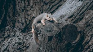 Animal Squirrel 1680x1050 Wallpaper