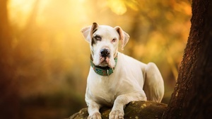 Depth Of Field Dog Pet 2048x1427 wallpaper