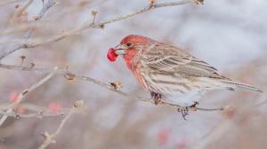 Bird Wildlife 2048x1362 wallpaper