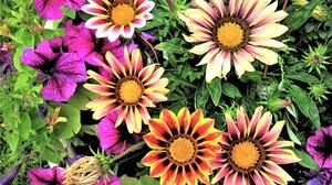 Flower Colors Colorful 4000x3000 Wallpaper