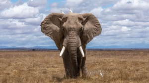 Elephant Wildlife 2048x1152 wallpaper