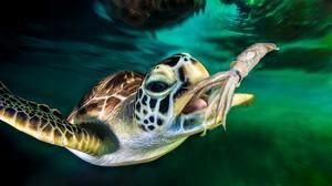 Animal Ocean Sea Turtle Squid Turtle 3840x2400 wallpaper
