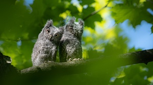 Baby Animal Bird Owl Owlet Wildlife 2048x1365 Wallpaper