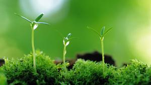 Plant Green Close Up Macro 2560x1600 Wallpaper